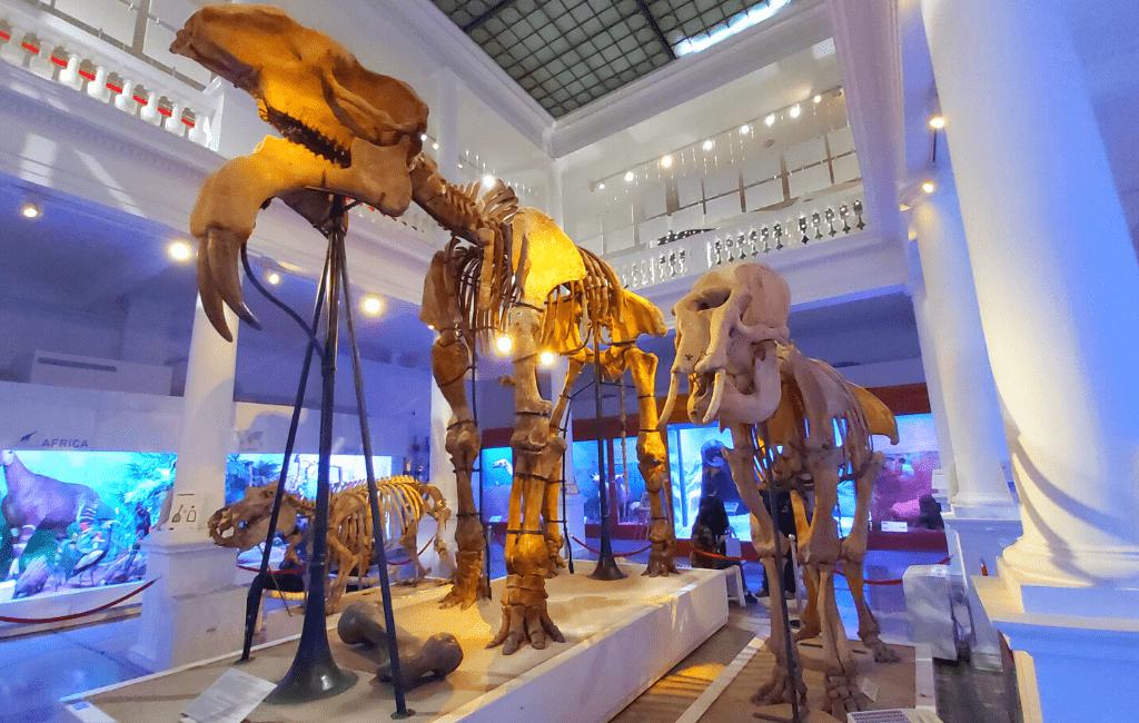 Antipa Museum