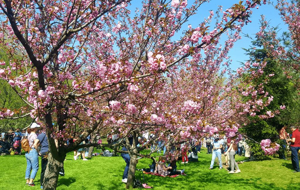 Japanese Gardens, Herăstrău Park